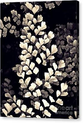 Leaf Abstract 15 Sepia Canvas Print by Sarah Loft