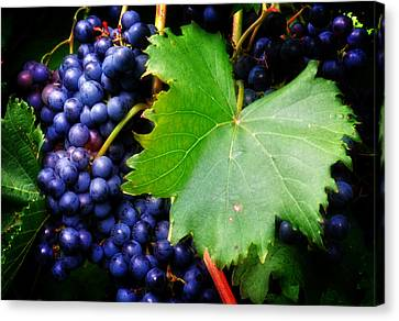 Leaf And Grapes Canvas Print by Greg Mimbs