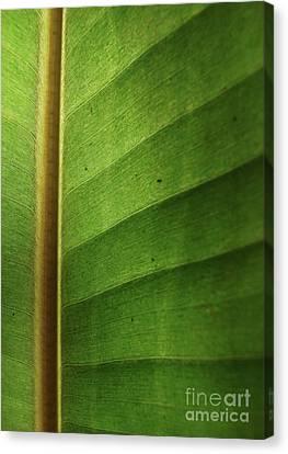 Artistic Canvas Print - Leaf Art - Abstract  by Prar Kulasekara
