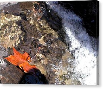Leaf At Richland Creek Canvas Print by Steve Grisham
