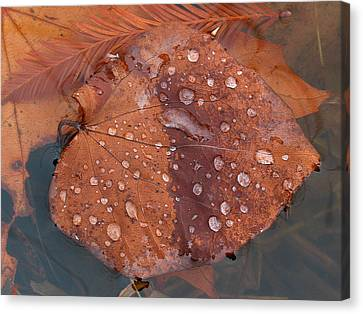 Leaf Blues Canvas Print by Juergen Roth