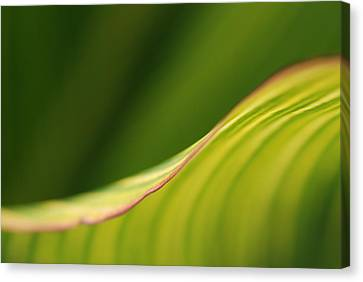 Leaf Canvas Print
