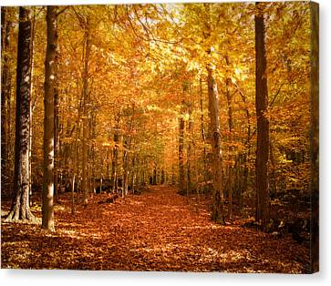 Leaf Covered Pathway In A Golden Forest Canvas Print by Chantal PhotoPix