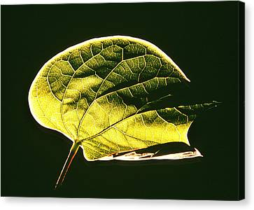 Leaf Detail Canvas Print by Gerard Fritz