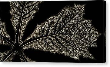 Leaf Detail Canvas Print by Martin Newman