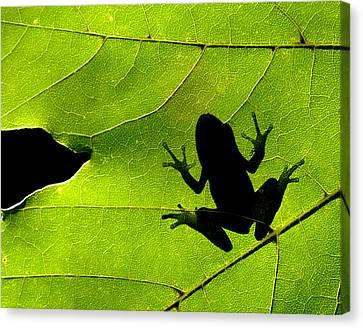 Leaf-frog Canvas Print