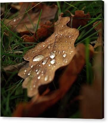 Leaf In Autumn. Canvas Print by Bernard Jaubert