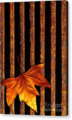 Leaf In Drain Canvas Print
