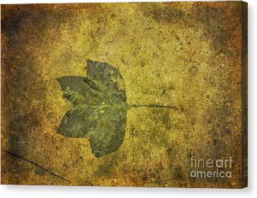 Leaf In Mud One Canvas Print by Randy Steele