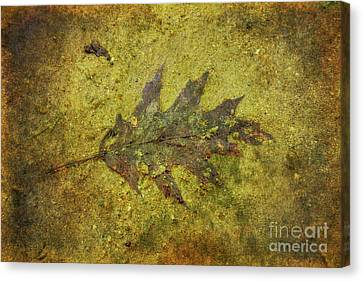 Leaf In Mud Two Canvas Print by Randy Steele
