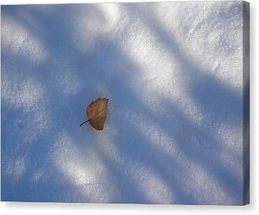 Leaf In Shadows Canvas Print