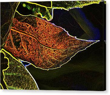 Leaf Interpretation Canvas Print by Norman  Andrus