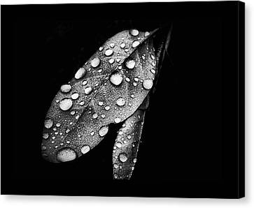 Leaf It Canvas Print by Karen M Scovill