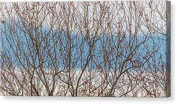 Leaf Less Canvas Print by Gary Migues