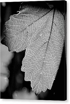 Leaf Light Black And White Canvas Print by James Granberry