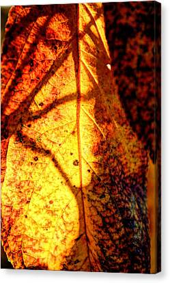 Leaf Light Canvas Print
