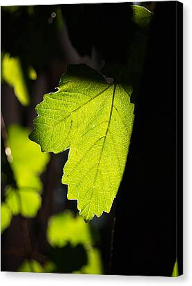 Leaf Light I Canvas Print