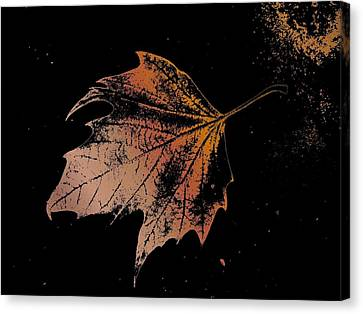 Leaf On Bricks Canvas Print by Tim Allen