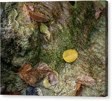 Leaf On The Bottom Of A Shallow Stream Canvas Print
