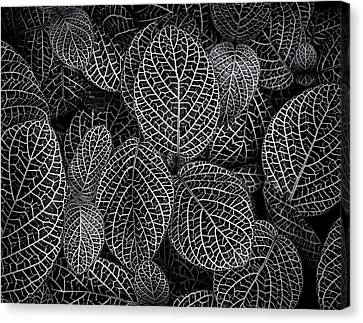 Canvas Print featuring the photograph Leaf Pattern by Wayne Sherriff