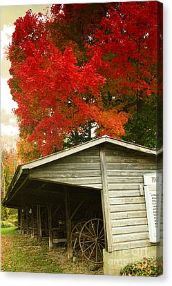 Leaf Peeping Canvas Print by Mindy Sommers