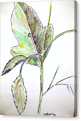 Leaf  Canvas Print by Scott Easom