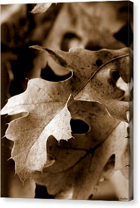 Leaf Study In Sepia IIi Canvas Print by Lauren Radke
