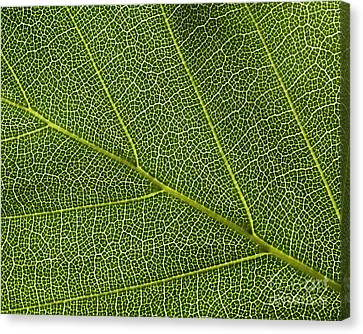 Leaf Textures Canvas Print by Tony Higginson