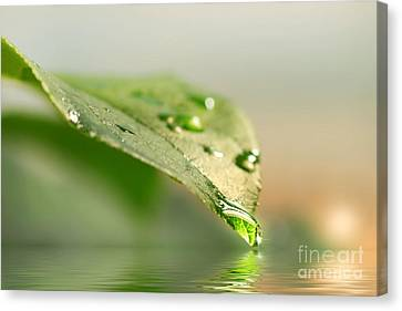 Leaf With Water Droplets Canvas Print by Sandra Cunningham