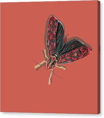 Leafhopper Canvas Print by Jude Labuszewski