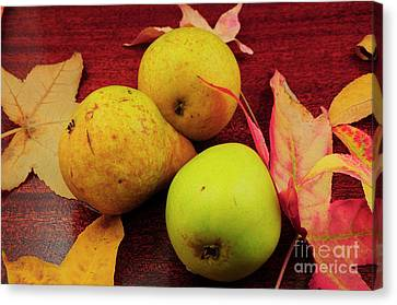Leafs And Pears Canvas Print by Timothy OLeary
