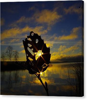 Vermilion Bay Sunrise Canvas Print - Leafy Sunburst by Tim Beebe