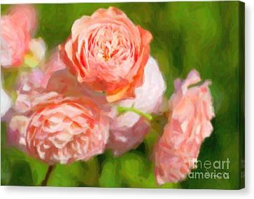 Leander English Rose Canvas Print by Verena Matthew