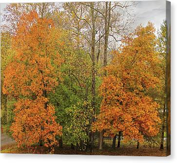 Canvas Print featuring the photograph Leaning Into Autumn by Bellesouth Studio