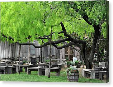 Leaning Tree Canvas Print by Teresa Blanton