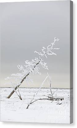Leaning Tree Canvas Print by Tim Grams