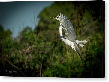 Canvas Print featuring the photograph Leap Of Faith by Marvin Spates