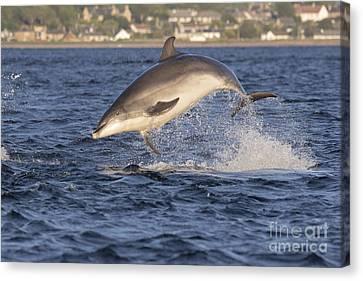 Jolly Jumper - Bottlenose Dolphin #40 Canvas Print
