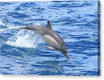 Leaping Dolphin Canvas Print by Shoal Hollingsworth