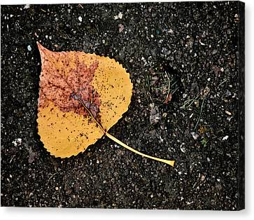 Leaved Canvas Print by Tom Druin