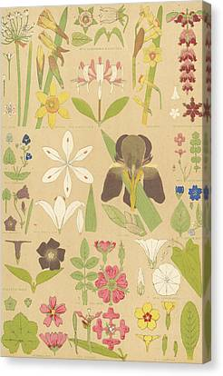 Leaves And Flowers From Nature Canvas Print by English School