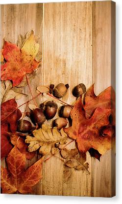 Canvas Print featuring the photograph Leaves And Nuts 2 by Rebecca Cozart