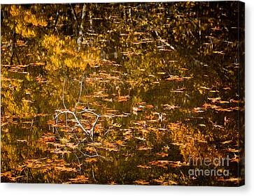 Leaves And Reflections Canvas Print by Susan Cole Kelly