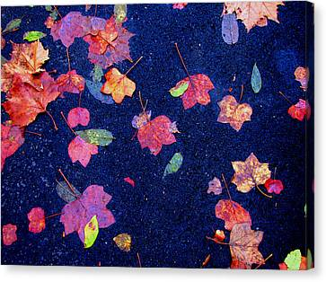 Leaves Canvas Print by Christopher Woods