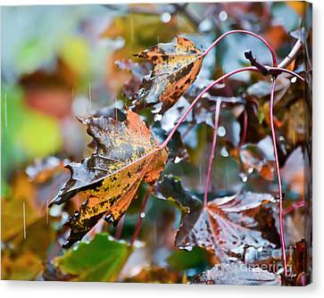 Leaves In The Rain Canvas Print