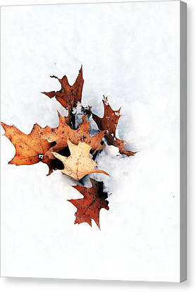 Leaves In Winter Canvas Print