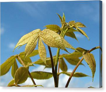 Canvas Print featuring the photograph Leaves Of Gold by Peg Urban