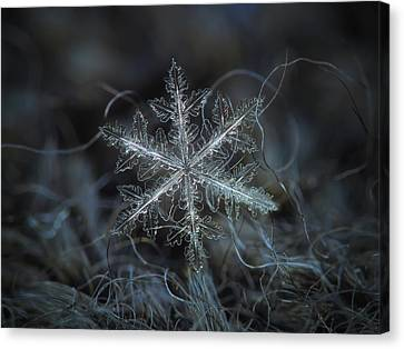 Leaves Of Ice Canvas Print