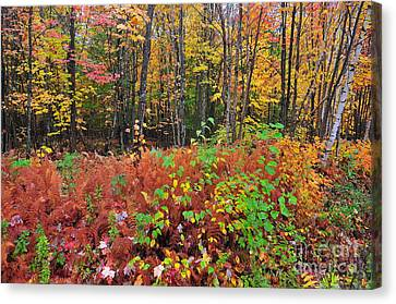 Canvas Print - Leaves Of Many Colors  by Catherine Reusch Daley