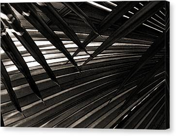 Leaves Of Palm Black And White Canvas Print by Marilyn Hunt